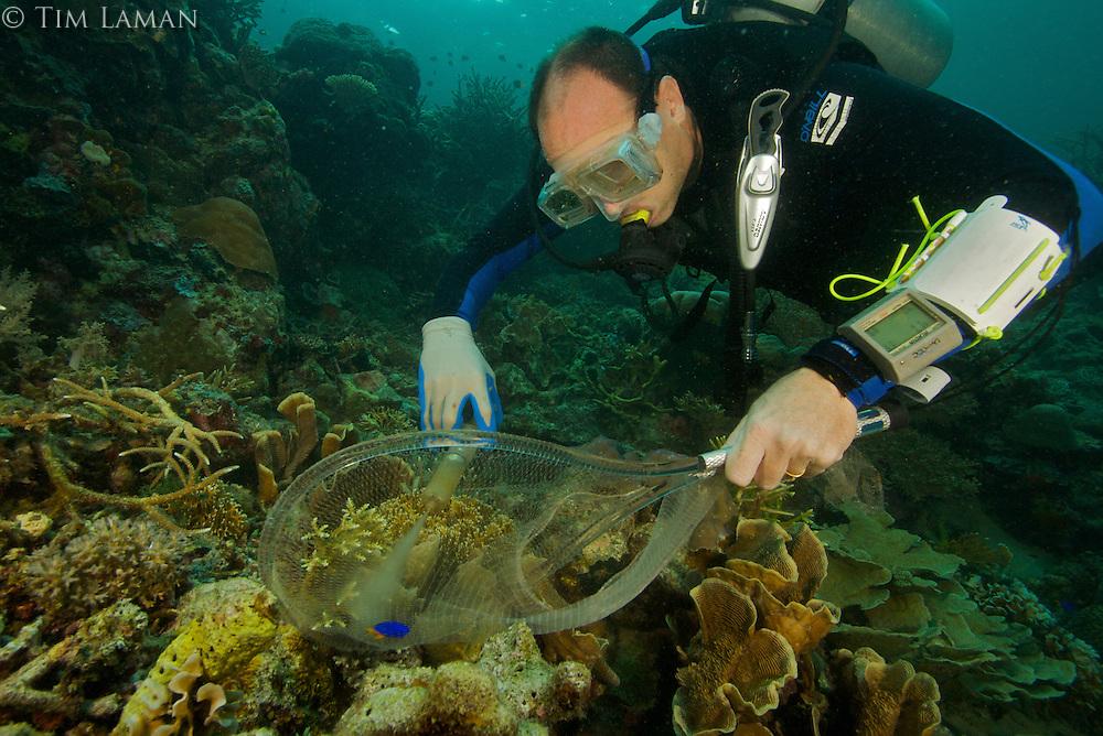 Conservation International marine biologist Mark Erdmann capturing a specimen of a new species of damselfish.  Sebakor Bay, Fak Fak Peninsula, Indonesia.