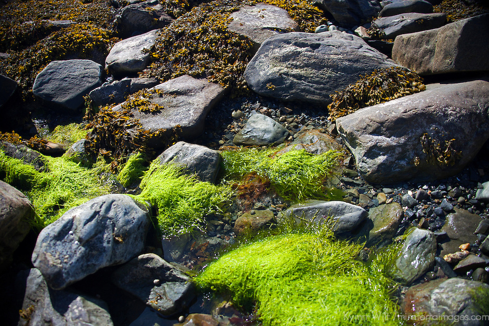 North America, Canada, Nova Scotia, Tor Bay Shore Rocks and Algae.