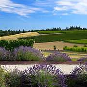 The beautiful grounds at Methven Family Vineyards in Oregon, Bocce court in foreground and proof it doesn't rain all the time