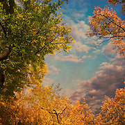 Colourful trees in autumn against a cloudy sky