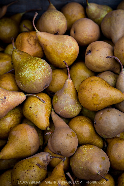 Freshly harvested Bosc pears, an autumn treat, for sale at the local farmers market.