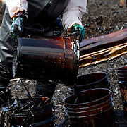A fisherman spills oil found in the margins of the the Coatzacoalcos river  into a bucket in in the state of Veracruz on January 7, 2012.  Greenpeace traveled in the zone affected by the oil spill in El Polvorín, in Cosoleacaque, Veracruz, that has contaminated at least 12 km of the Coatzacoalcos River. Local fishermen contracted to clean the disaster have not been paid for these activities and work under risk conditions for their health, breathing the hydrocarbon steam during more than twelve hours daily.(Photo: Greenpeace / Prometeo Lucero)