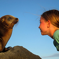 South America, Ecuador, Galapagos Islands. Young girl encounters Galapagos Sea Lion pup.