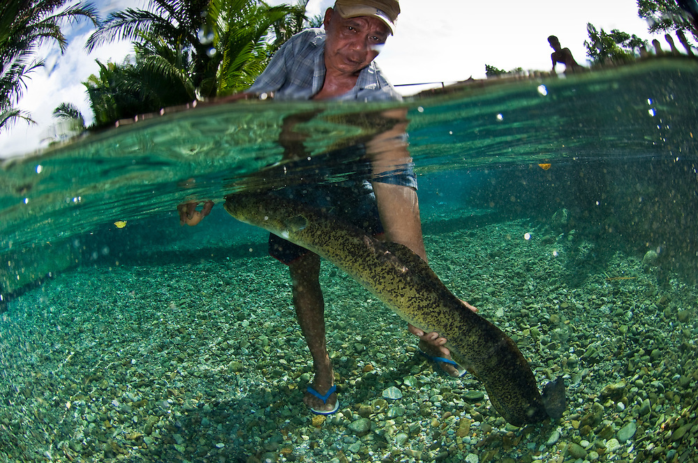 freshwater spring is home to a population of large eels. These animals ... Zoology Pictures Animals