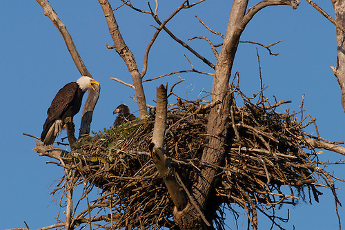 eagle nest dating This forum covers eagle nest, nm local community news, events for your calendar, and updates from colleges, churches, sports,  news forums crime dating.
