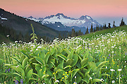 Dawn over the Twin Sisters Range seen from wildflower meadows of Skyline Divide, Mount Baker Wilderness, Washington