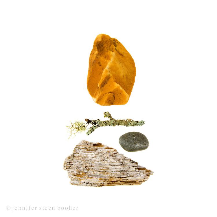 Polystyrene buoy fragment, lichen-covered driftwood, beach stone, bark.
