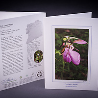 One of the most beautiful orchids found in NHs woodlands is the lovely Pink Lady's Slipper.  It is NH's State Wildflower. <br />
