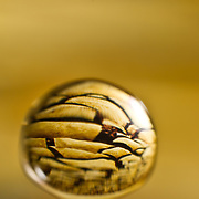A droplet taken with a F65 macro lens in the studio, frozen to reflect desert sand in the background in the studio.