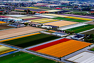 LISSE - flowers fields form ghe sky . Luchtfotos van de bollenvelden van de Keukenhof in volle bloei.  copyright robin utrecht