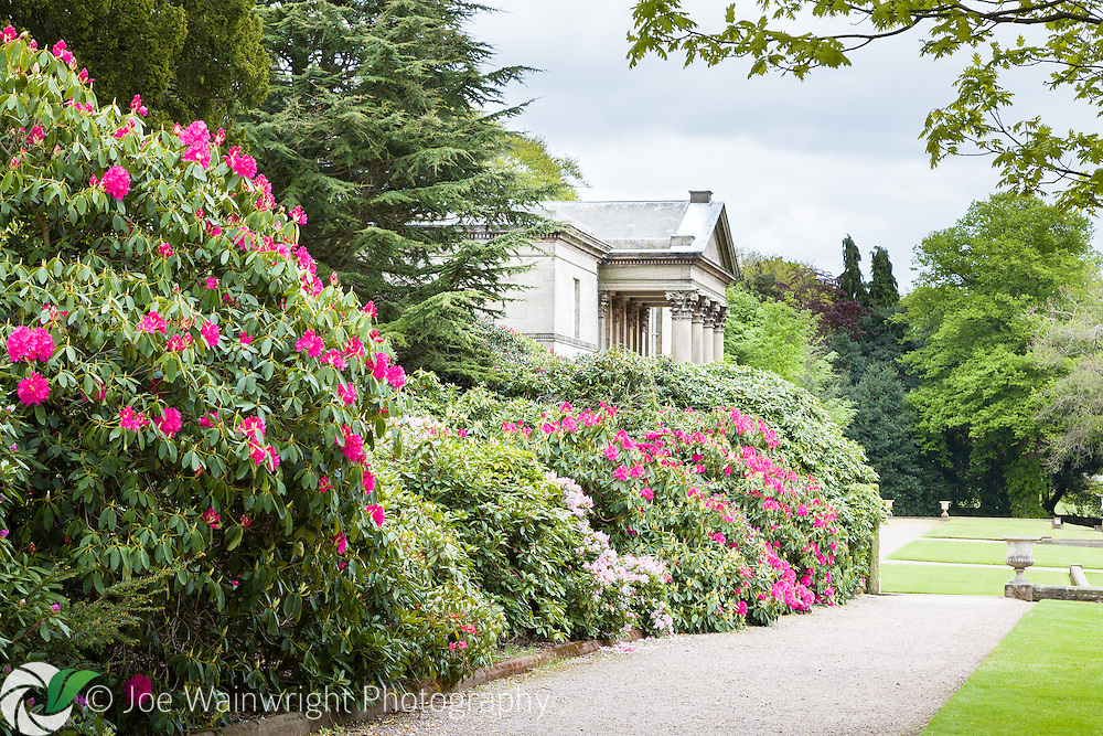 The gardens at Tatton Park, Cheshire, are well known for the brilliant display of rhododendrons and azaleas that can be enjoyed there in May and June.