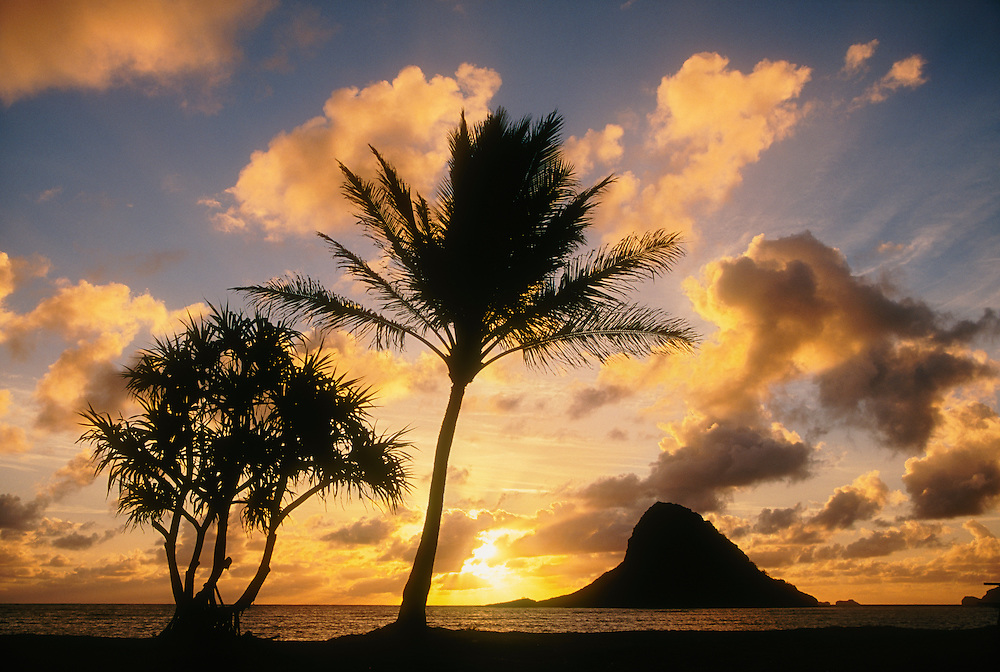 "Sunrise and Mokoli'i Island (""Chinaman's Hat""), with lauhala (Pandanus) tree and coconut palm; Kualoa County Beach Park, Windward Oahu, Hawaii."