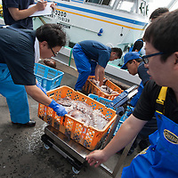 Japanese fisherman land their catch of octopus, and large whelks, at the fishing port which has barely recovered from the March 2011 tsunami, in the Matsukawaura district of Soma, Japan, on Monday 23 July 2012. The octopus and whelks are then checked for radiation contamination, at the seafood radiation testing centre, located beside the port, and if the seafood is found to be clear it will be on sale within local shops within two days.