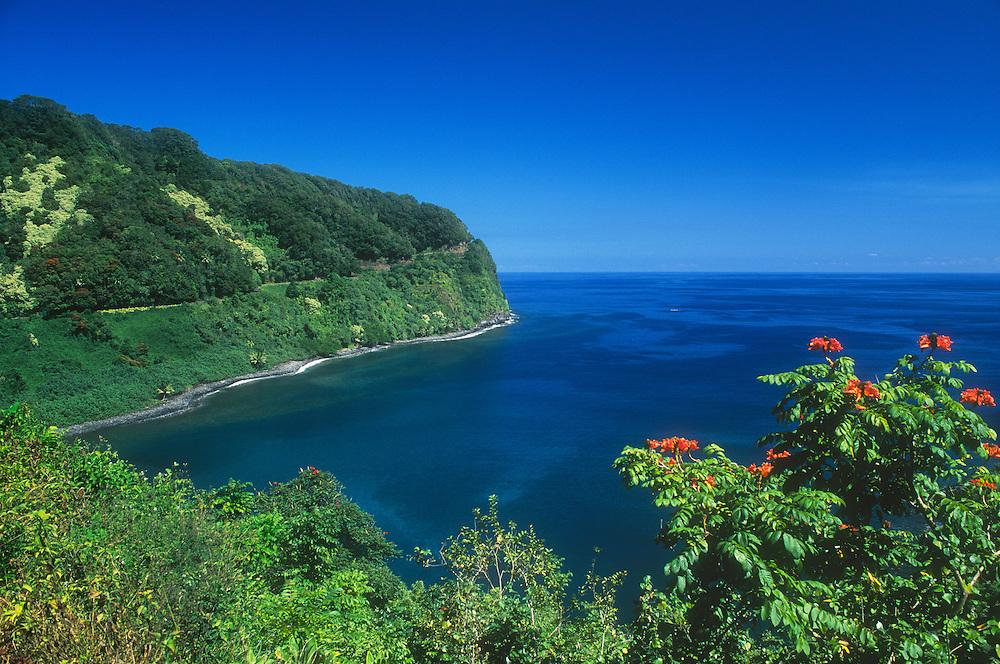 Honomanu Bay and the Hana Highway, with African Tulip Tree blooming in foreground; Hana Coast, Maui, Hawaii.