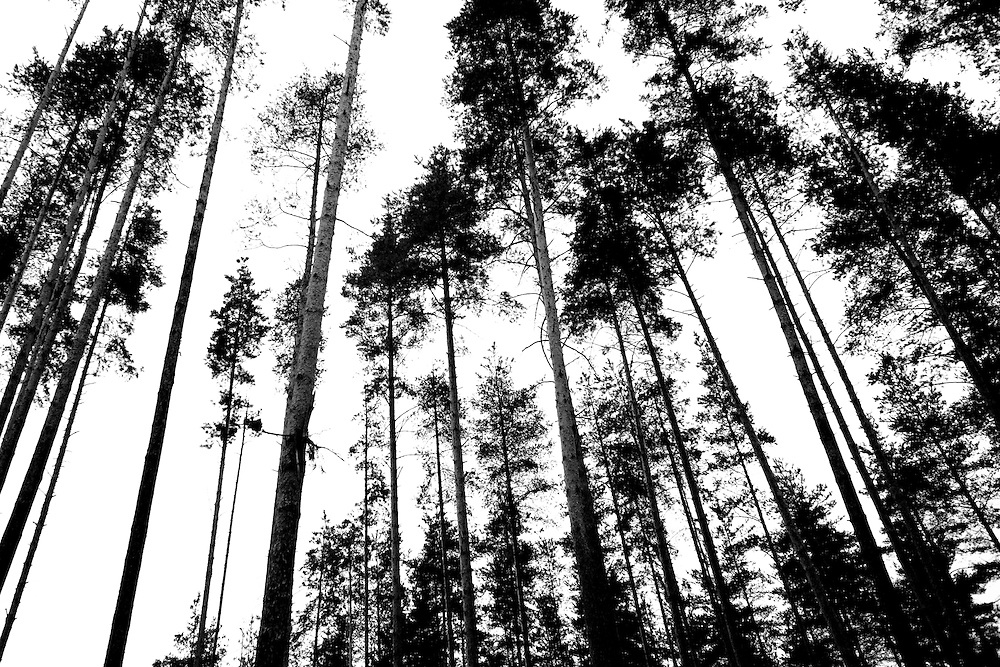 Tall trees surround a rehabilitation program run by the orthodox church in Sapernoe, Russia, on Saturday, September 15, 2007. About a dozen people at a time live and work at the remote farm, about two hours from St. Petersburg, for a free one year course of treatment.