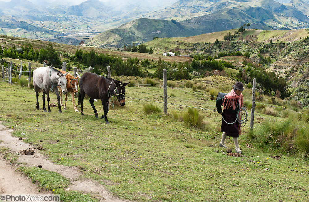 A woman leads three horses on a rope at Quilotoa in the Andes Highlands, Ecuador, South America.