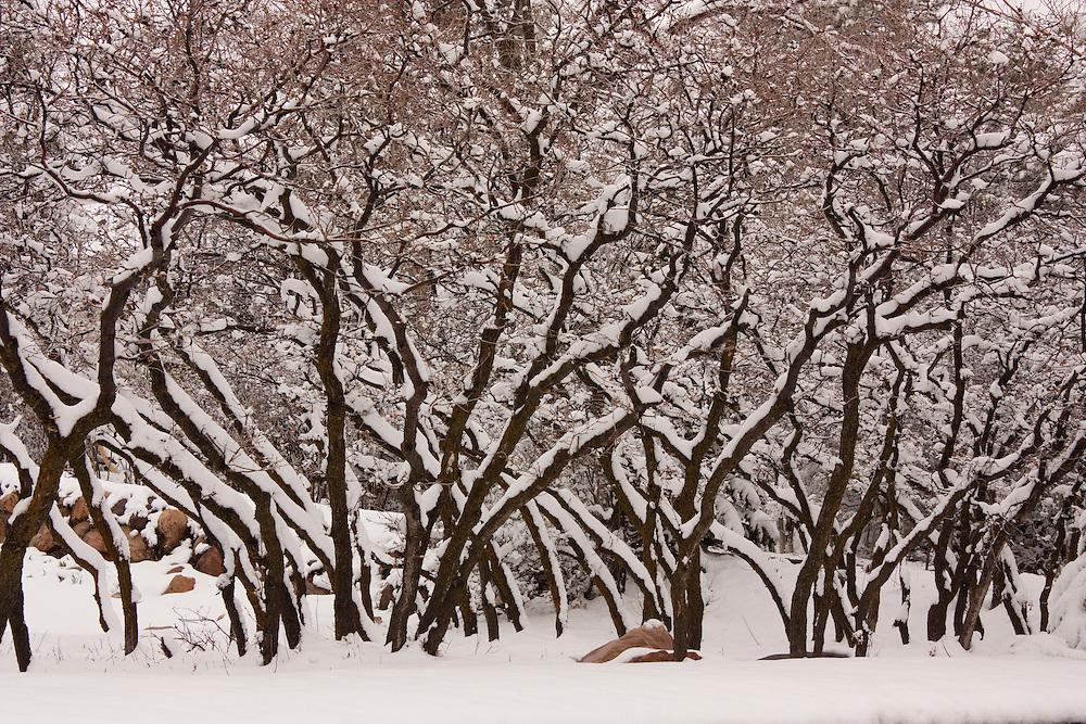Fresh snow covers tree branches in Salt Lake City, Utah