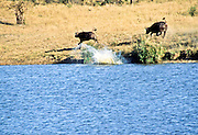 Battle at Kruger No. 6