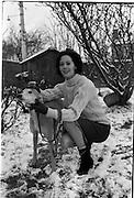 27/12/1962<br /> 12/27/1962<br /> 27 December 1962<br /> Orla N&iacute; Sh&iacute;ochain, Dublin Model working in Paris home for Christmas at Rathfarnham Park, Dublin with two of her parent's greyhounds.