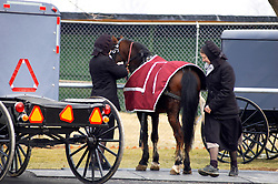 Two amish women unhitch horse from buggy at Lancaster county mud sale. Local volunteer fire companies raise funds through what have affectionately come to be known as Mud Sales. Numerous inside and outside auctions take place simultaneously.  The winter and early spring sale dates work best for farmers as this is when they have more time available. Items sold include furniture craft items quilts building materials livestock buggies carriages tools farming supplies garden items antiques