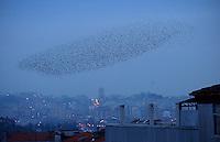 """. Porto . Fevereiro de 2003 . Um inesperado bando de p·ssaros sobrevoa os telhados da Baixa da cidade..(MenÁ""""o Honrosa na categoria de Natureza, PrÈmio VISAO 2003)"""