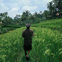 Indonesia, Bali, Farmer walks through rice field in central Bali