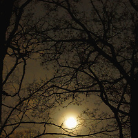 Moonlight in trees.