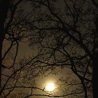 Moonlight in trees.