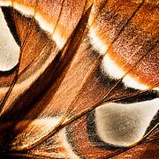 Moth Wing close-up taken on a dark-field illuminator