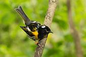Stitchbird Pictures - Photos