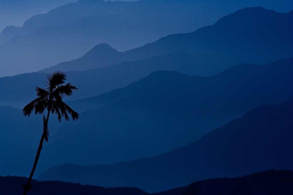 Palm tree silhouetted against mountains in the Sierra Nevada de Santa Marta, Colombia