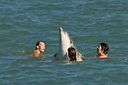 """Friendly, solitary bottlenose dolphin """"Dave"""" playing with swimmers. Hythe, Kent, UK"""