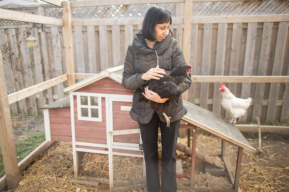 Exeter, Ontario ---2015-12-09--- Ramona Dunn holds one of her chickens at her home in Exeter, Ontario, December 9, 2015. The Canada Revenue Agency is threatening to put a lean on her home after her former employer Native Leasing Services lost a court battle to the CRA over the ability of  status Indians to exercise their right to be exempt from income taxes, even if not working on a reserve.<br /> GEOFF ROBINS Toronto Star