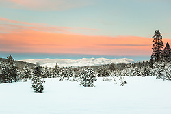 """Snowy Field at Sunset 1"" - Photograph of a snow covered field and pine trees at sunset near Coldstream Pond in Truckee, California."