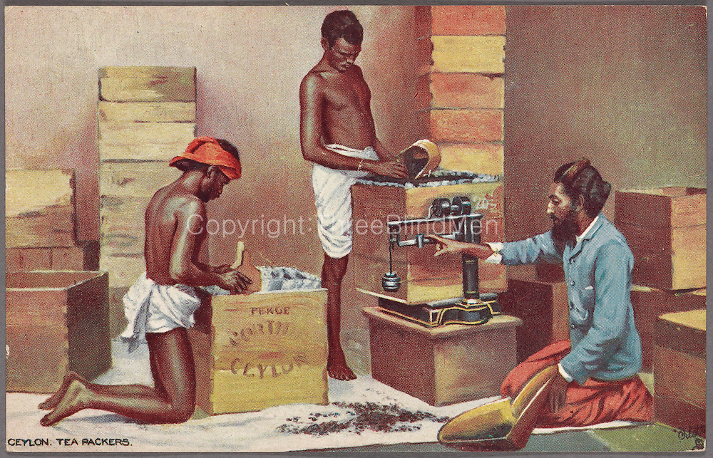 """Content: Printed on verso: """"The amount of tea exported annually from Ceylon exceeds 150,000,000 lbs., and about 100,000 coolies from Southern India are employed in the tea-gardens. The greatest tea-districts are Dickoya and Dimbula, where a large number of coolies are employed under the skilled charge of such men as the Cingalese overseer here shown."""""""