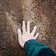 A human hand provides a sense of scale for an allosaurus dinosaur track near Potash, Utah. Scientists believe the dinosaur had an average length of nearly 30 feet. The area was marshy when dinosaurs roamed Utah, and the muddy footprint eventually turned to sandstone. ...There are a number of dinosaur tracks found throughout Utah. The area was swampy when dinosaurs live there. They left footprints in the mud, which later turned into sandstone.