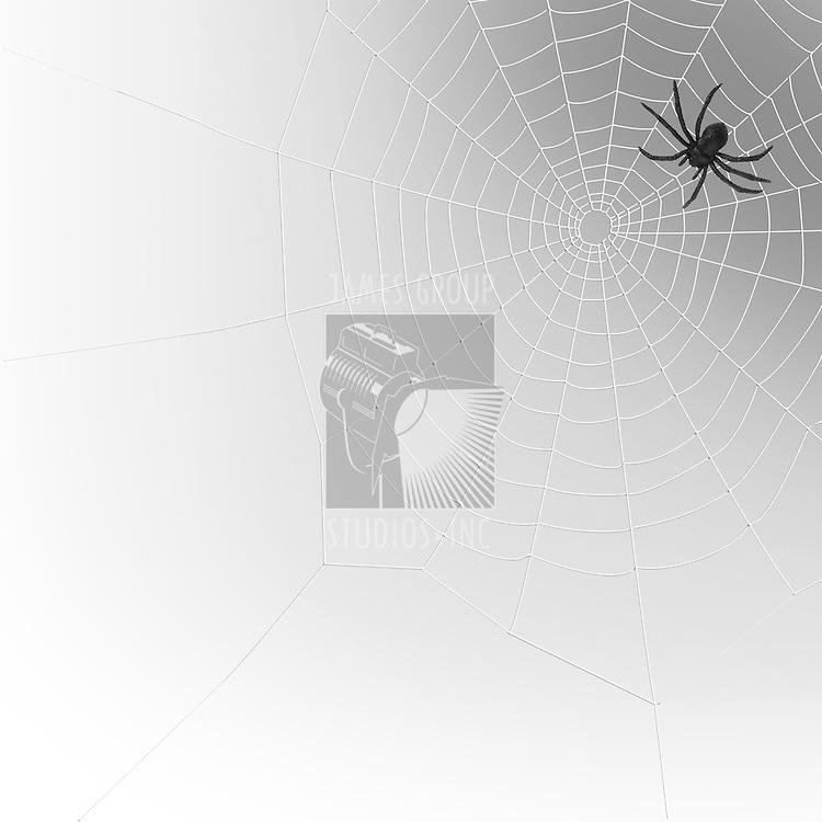 spider on a spiderweb
