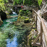 Vintgar Gorge (Blejski Vintgar / Soteska Vintgar) is a beautiful canyon of pools and rapids 1.6-km long (1 mile) in Slovenia near the settlement of Zgornje Gorje, four km northwest of Bled, in the Upper Carniola region of Slovenia, Europe. Discovered in 1891, the intriguing gorge has been open for viewing from wooden observation walkways and bridges since 1893. Due to the ancient Bohinj Glacier damming the Radovna River into a lake, the river was diverted from eastward flow to its present northeast course, carving sheer canyon walls 50 to 100 meters (160 to 330 ft) deep through a soft layer of triassic limestone between the peaks of Borst and Hom, and emptying into the Upper Sava River Valley.