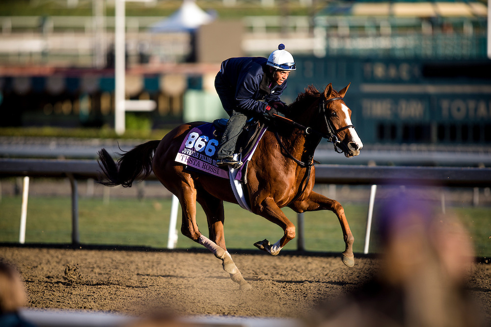 Tessta Rossi trains for the Breeders' Cup Juvenile Fillies Turf at Santa Anita Park in Arcadia, California on October 31, 2013. (Alex Evers/ Eclipse Sportswire)