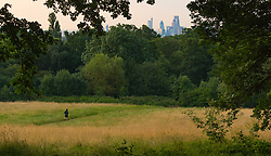 Hampstead Heath, London, July 20th 2016. The skyscrapers of tThe City seem a long way from the early morning tranquility of Hampstead Heath as London prepares for another hot summer's day. &copy;Paul Davey<br /> FOR LICENCING CONTACT: Paul Davey +44 (0) 7966 016 296 paul@pauldaveycreative.co.uk
