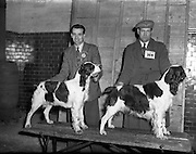 28/12/1952<br /> 12/28/1952<br /> 28 December 1952<br /> Dog Show, Dublin Society at Portabello Barracks,Robert Kirkland, Newry with his English Springer &quot;Diamond of Downshire&quot;, Green Star and best of breed and John Barker, Co. Tyrone with his English Springer &quot;Shot of Lissen&quot;, Reserve Green Star at show.