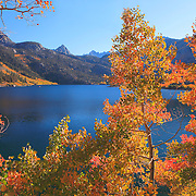 Bishop Lakes, CA - Fall Color