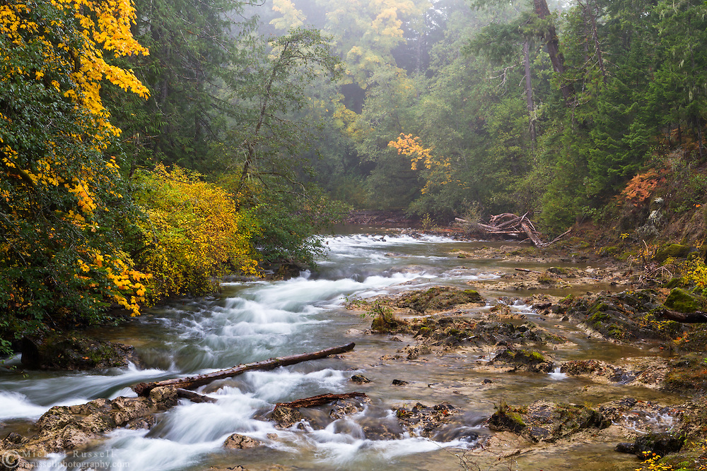 Fall colours and fog along the Little Qualicum River in Little Qualicum Falls Provincial Park on Vancouver Island, British Columbia, Canada