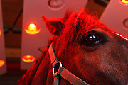 "..Switzerland, Uzwil, Health Balance clinic for animals....A horse resting and drying out under red lamps, after an aquatraining..session....... The goldfish swims lazily between the fronds of fake seaweed, under the attentive gaze of the medical staff. ?When he came here he was moving all wrong. He swam crooked, he was almost upside-down,? explains Marisa Polanec, obviously enthusiastic at the result. For it appeared that the littlest in-patient at Health Balance, the Swiss clinic for animals, had been suffering from electrosmog poisoning. ..An unusual complaint, yes, but here, in the midst of the clinic?s futuristic architecture and the green hills of San Gallo canton, the concept of normality is done away with even before arriving at a diagnosis. That?s because, to identify the cause of the goldfish?s suffering, Urs Buehler ?kinesiologist and the centre?s founder, as well as the owner of an industrial colossus in the region ?simply asked it, by using his ever-present dowsing rod. .. The goldfish swims lazily between the fronds of fake seaweed, under the attentive gaze of the medical staff. ?When he came here he was moving all wrong. He swam crooked, he was almost upside-down,? explains Marisa Polanec, obviously enthusiastic at the result. For it appeared that the littlest in-patient at Health Balance, the Swiss clinic for animals, had been suffering from electrosmog poisoning. ..An unusual complaint, yes, but here, in the midst of the clinic?s futuristic architecture and the green hills of San Gallo canton, the concept of normality is done away with even before arriving at a diagnosis. That?s because, to identify the cause of the goldfish?s suffering, Urs Buehler ?kinesiologist and the centre?s founder, as well as the owner of an industrial colossus in the region ?simply asked it, by using his ever-present dowsing rod. ....Il pesciolino rosso nuota flessuoso tra le alghe finte, sotto lo sguardo attento di un ristretto staff medico. ""Quando è arrivato qui si muove"