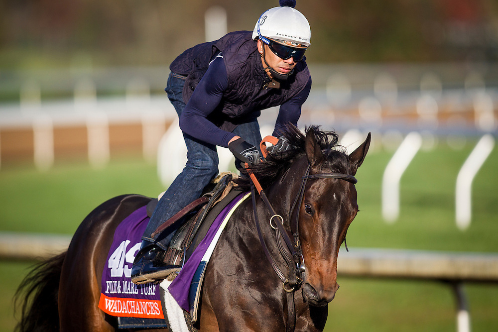 October 29, 2015:   Watsdachances (IRE), trained by Chad C. Brown and owned by Michael E. Kisber , Bradley Thoroughbreds & Nelson McMakin, exercises in preparation for the Breeders' Cup Filly & Mare Turf at Keeneland Race Track in Lexington, Kentucky. Alex Evers/ESW/CSM