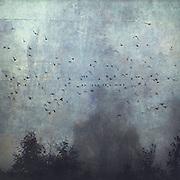 B&auml;ume im Nebel mit Vogelschwarm auf Stromleitung, manipulierte Fotografie, Wuppertal, Deutschland<br /> Redbubble prints: http://www.redbubble.com/people/dyrkwyst/works/20598088-fantasmas?ref=recent-owner