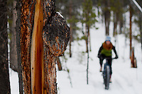 Rider - Jenn Roberts, Race Name - 5+ Hours of Light Fat Tire Festival (Winter Solstice Race), Trail Name - Boogaloo Heights, Whitehorse Yukon