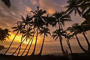 Man photographing coconut palm trees and sunrise at Kama'ili on the Kalapana coast of the Big Island of Hawaii.