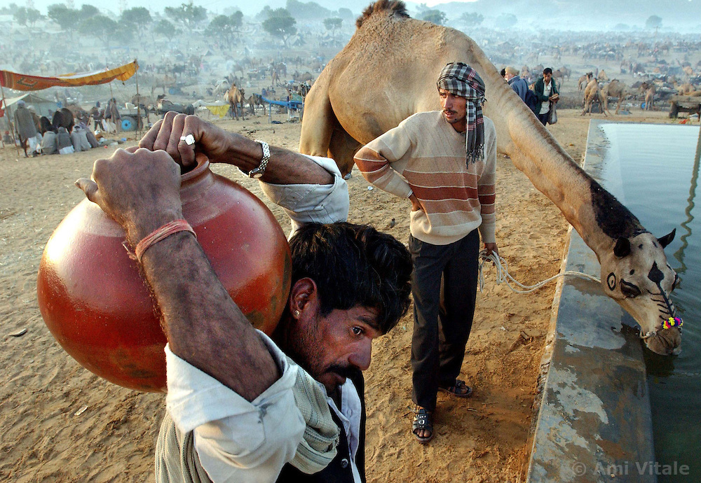 Camel fair-water-Camel traders from India water their livestock and carry the precious liquid back to their camp site in traditional clay pottery at the largest camel fair in the world in Pushkar, India in the state of Rajasthan November 27, 2001.