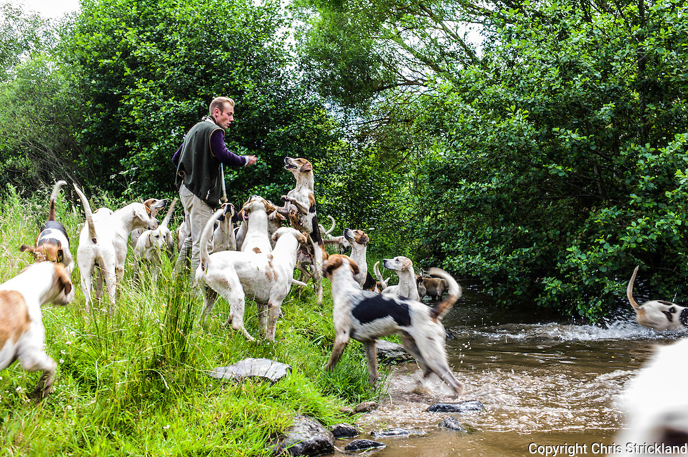 Abbotrule, Bonchester Bridge, Hawick, Scotland, UK. 9th July 2015. Huntsman Johnny Richardson exercises the hounds of the Jedforest Hunt on the banks of Rule Water in the Scottish Borders on a summers afternoon.